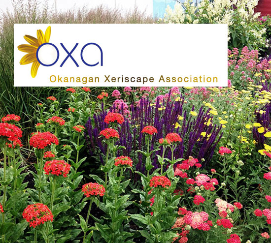 Link to the Okanagan Xeriscape Association ( OXA ) website