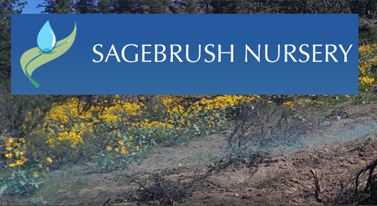 Link to Sagebrush Nursery website by Waterwise Landscape Design in Kelowna